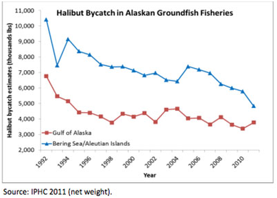 Halibut Bycatch in Alaskan Groundfish Fisheries